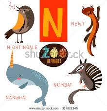 stock vector cute zoo alphabet in vector n letter funny cartoon animals nightingale newt narwhal numbat