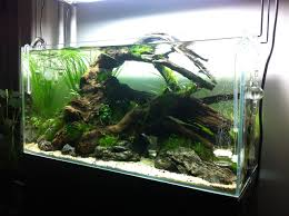 Aweinspiring Home Aquariums ...