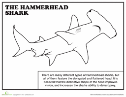 Small Picture Hammerhead Shark Color 15 Coloring Pagegif Coloring Pages Maxvision
