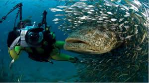 giant amazon river fish. Fine Amazon Amazon River Fish  Giant Found In The  YouTube Intended N