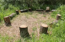 Tree Stump Seats A Picnic Site Of Wooden Tree Trunk Seats In A Circle Stock Photo