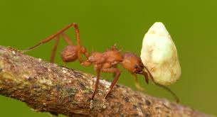 Andy Ant. A Fable | by Greg M Wells | Medium