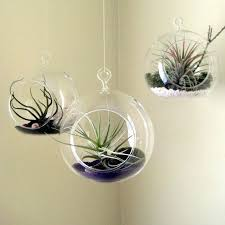 hanging plant holders set hanging glass air plant 2 side holes in orb terrarium hanging plant holders diy