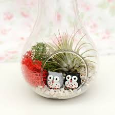 Air Plant Terrarium Apple And Pear Glass Vase Air Plant Succulent Terrarium By