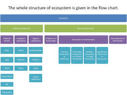 Components Of Ecosystem Flow Chart Unit 1 Topic 2 Ecology And Ecosystem Ppt Download