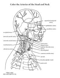 Small Picture 100 best Anatomy images on Pinterest Coloring pages Human