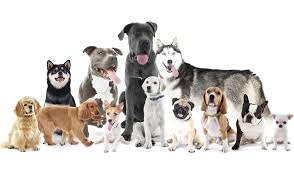 dog breed size chart friendly dog grooming in reading dog sizes