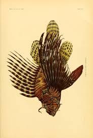 Samoan Fish Chart 1906 The Fishes Of Samoa Biodiversity Heritage Library