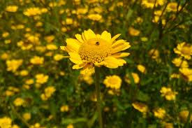 Kuvahaun tulos haulle kuvia kukat