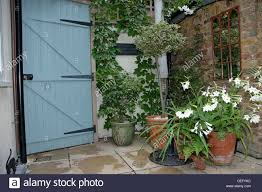 The Smell Of Jasmine Also Lessens Feelings Of Anxiety Box With Wall Climbing Plants In Pots