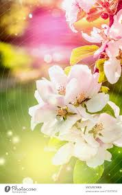 colourful nature background with spring