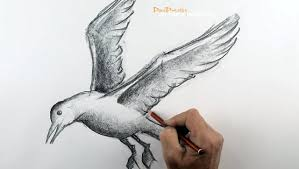 flying bird drawing. Unique Bird For Flying Bird Drawing