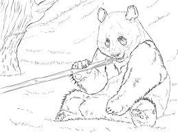 Reuzenpanda Eet Bamboo Kleurplaat Gratis Kleurplaten Printen