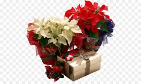 poinsettia gift plant flower png