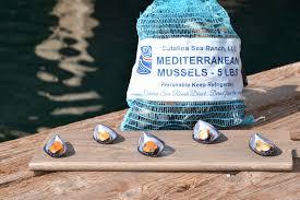 Overcoming Impediments To Shellfish Aquaculture Case
