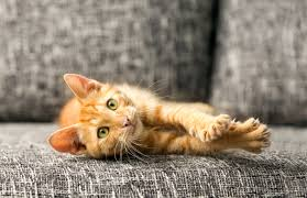 animal friendly furniture. Pet-friendly Furniture Is Worthwhile Investment Animal Friendly