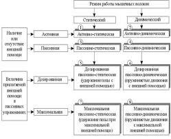 Гибкость задачи развития гибкости Рефераты ru Основные разновидности гибкости
