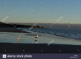 Low Tide Off The Coast Of Cape Cod With Seagulls Stock Photo