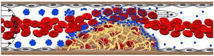 Resultado de imagen de tpa nanoparticle