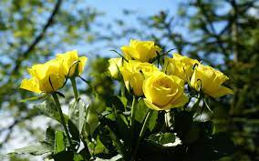 3d Rose Wallpapers (49+ best 3d Rose ...
