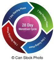 Female Menstrual Cycle Chart Menstrual Cycle Chart Average