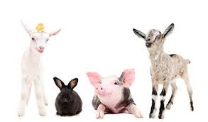 farm animals together. Perfect Animals Group Of Funny Farm Animals Together Isolated On White Background Stock  Photo  92475344 And Farm Animals Together N