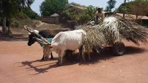 cherche femme senegalaise en gruyre