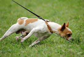Resultado de imagem para cão e coleira