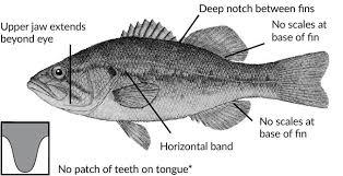 Fish Identification North Carolina Hunting Fishing