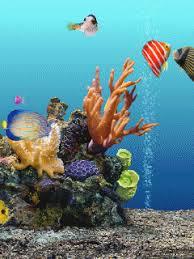 moving fish wallpaper for phones. Interesting Moving Animated Hd Aquarium Mobile Phone Wallpapers For Moving Fish Wallpaper Phones E