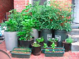1676 Best Container Gardening Ideas Images On Pinterest Container Garden Plans Pictures