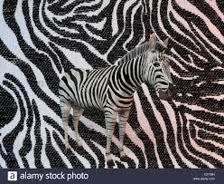 Zebra Patterns Extraordinary 48d Zebra Patterns Stock Photo 48 Alamy