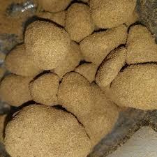 Buy Moon Rock Weed Online – Moon Rocks for Sale | Humboldt Bud Company