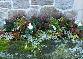 Container Garden Ideas For Any Household  Martha StewartContainer Garden Ideas For Winter
