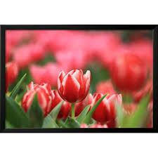 >red tulip framed print wall art by khao fofa walmart  red tulip framed print wall art by khao fofa