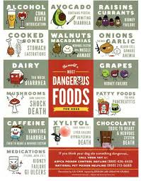 Foods Dogs Should Not Eat Chart Chart Of Poisonous Foods For Dogs Google Search Toxic