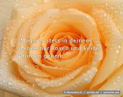 Rosensprüche Top 50 Die Besten Sprüche über Rosen Spruechenet