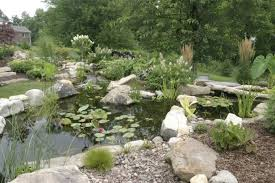 things to know before you build a pond