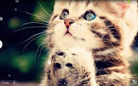 Winsome Adorable Cat Wallpapers Group (71+) And Exciting Q Cat Live  Wallpaper