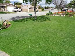 fresh lawn mowing service. Simple Mowing Image May Contain Tree Plant Grass Outdoor And Nature For Fresh Lawn Mowing Service