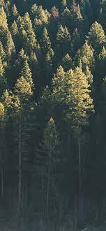 Forest, trees, sunshine, morning ...