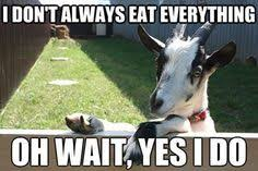happy thanksgiving time to eat everything just like the goats do funny goat memes