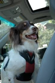 travel anxiety in dogs