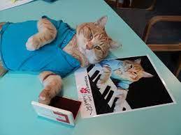 Keyboard-Cat-Autograph - CMYK
