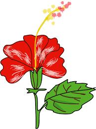 hawaiian flower clipart free