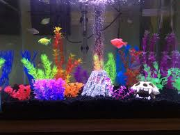 fish tank lighting ideas. my 20 gallon glofish tank live aquariumaquarium ideasfish fish lighting ideas