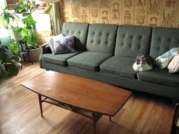 cat coffee table your couch dwelling cat probably wont judge you too harshly if you opt