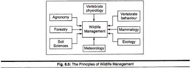essay on wildlife management in  principles of wildlife management