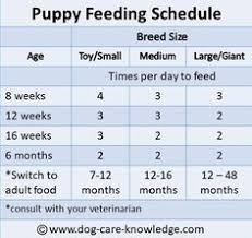 Lab Puppy Food Chart 13 Best Puppy Feeding Schedule Images In 2019 Dog Care
