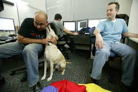 heaps of people have pets at google hq atmosphere google office